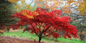 The Cotswolds Batsford Arboretum
