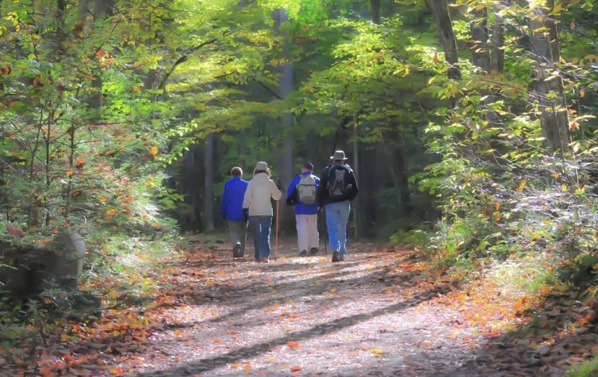Forest Walking group